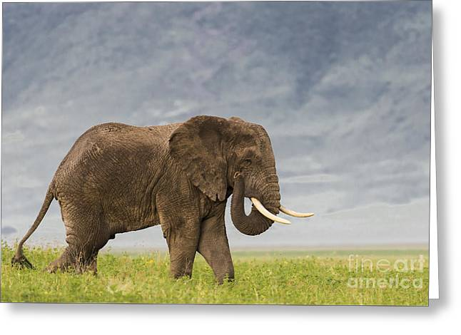 A Gentle Giant Greeting Card by Sandra Bronstein