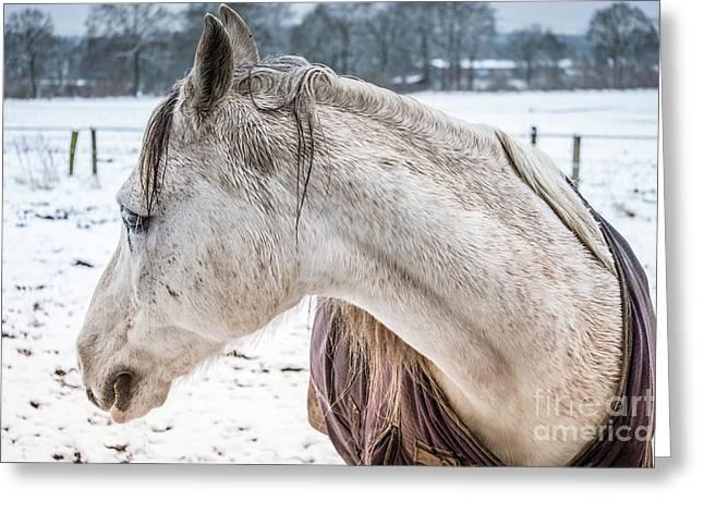 A Girlfriend Of The Horse Amigo Greeting Card