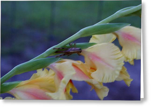 A Glad Hopper 3 Greeting Card by Debbie May