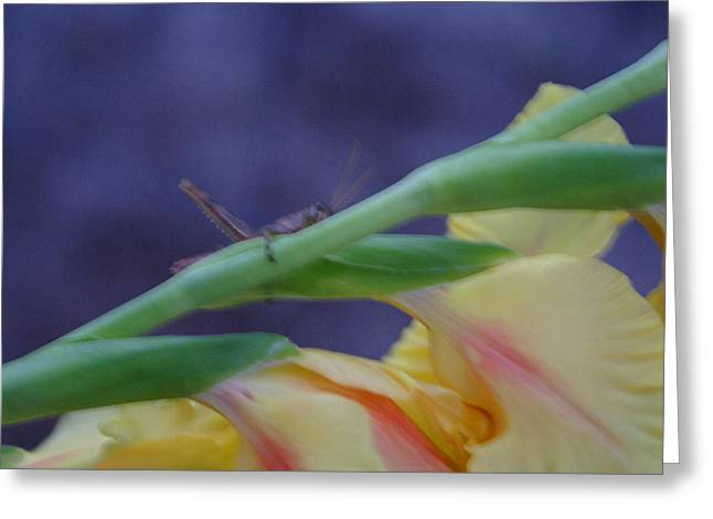 A Glad Hopper Greeting Card by Debbie May