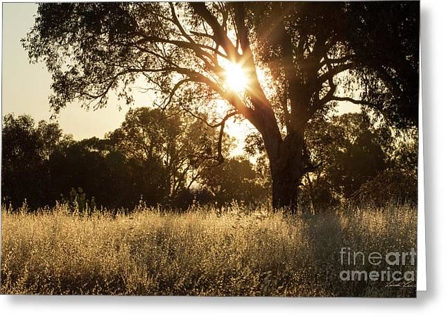 A Golden Afternoon Greeting Card by Linda Lees