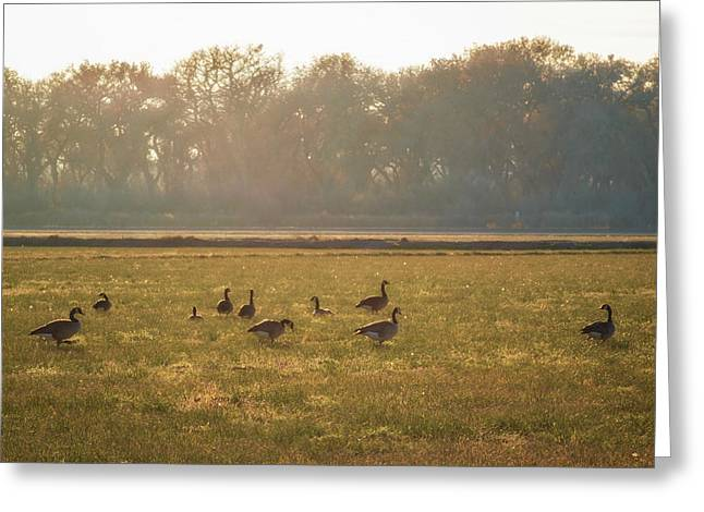 A Golden Dream Of Geese Greeting Card by Mary Lee Dereske