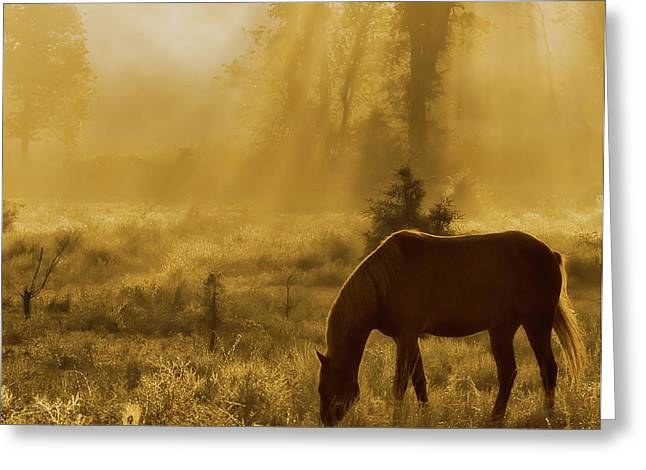 A Golden Moment Greeting Card by Ron  McGinnis