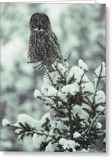 A Great Gray Owl Strix Nebulosa Perches Greeting Card by Tom Murphy