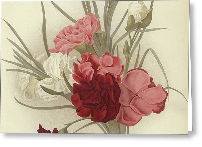 A Group Of Clove Carnations Greeting Card by English School