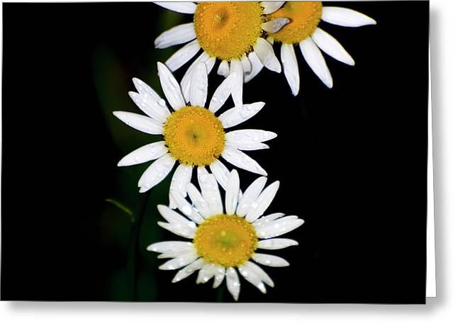 Greeting Card featuring the digital art A Group Of Wild Daisies by Chris Flees