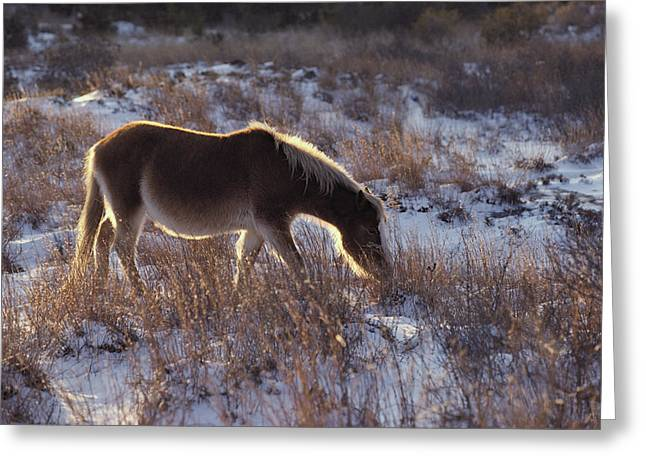 A Halo Of Winter Sunlight Frames Greeting Card by Medford Taylor