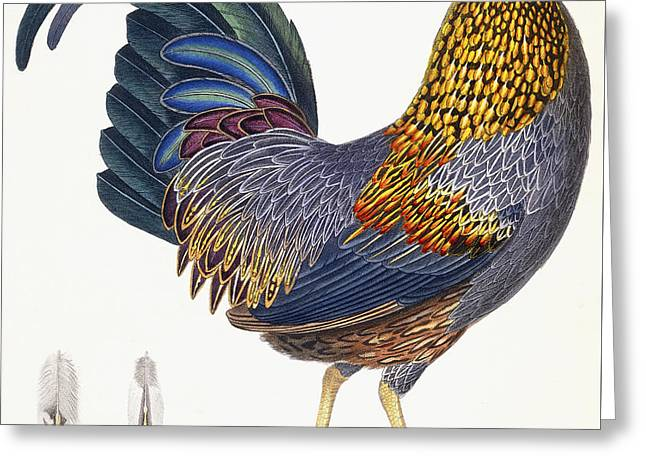 A Hen Greeting Card