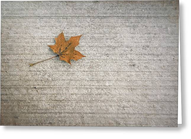 A Hint Of Autumn Greeting Card by Scott Norris