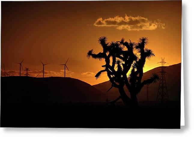 Greeting Card featuring the photograph A Holy Joshua Tree by Peter Thoeny