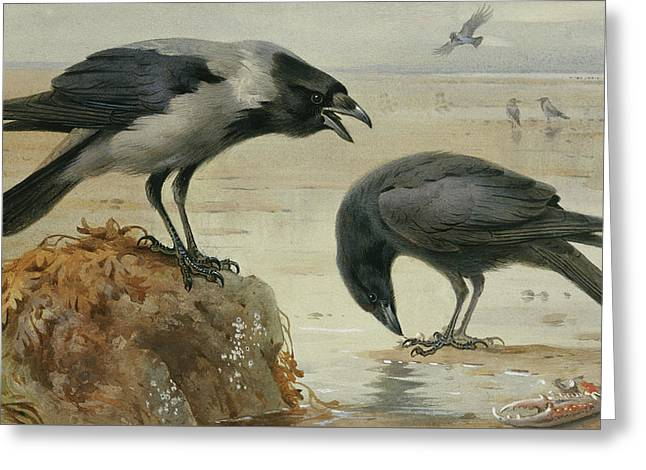 A Hooded Crow And A Carrion Crow Greeting Card by Archibald Thorburn