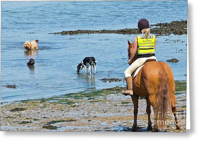 A Horse And Three Dogs At The Beach Greeting Card by Terri Waters