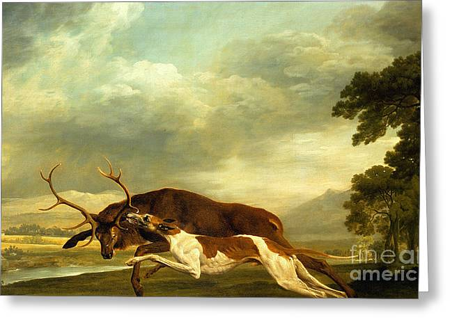 A Hound Attacking A Stag Greeting Card by George Stubbs