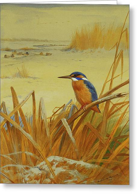 A Kingfisher Amongst Reeds In Winter Greeting Card by Archibald Thorburn