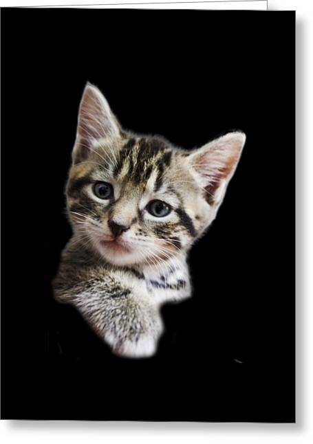 A Kittens Helping Hand On A Transparent Background Greeting Card by Terri Waters