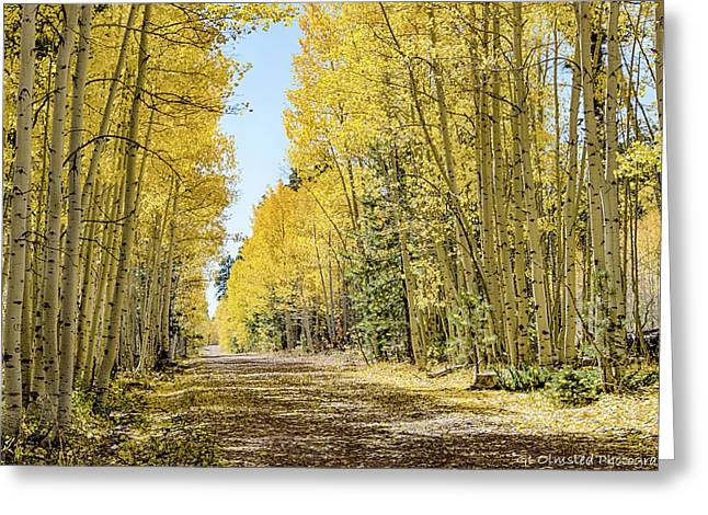 A Lane Of Gold Greeting Card