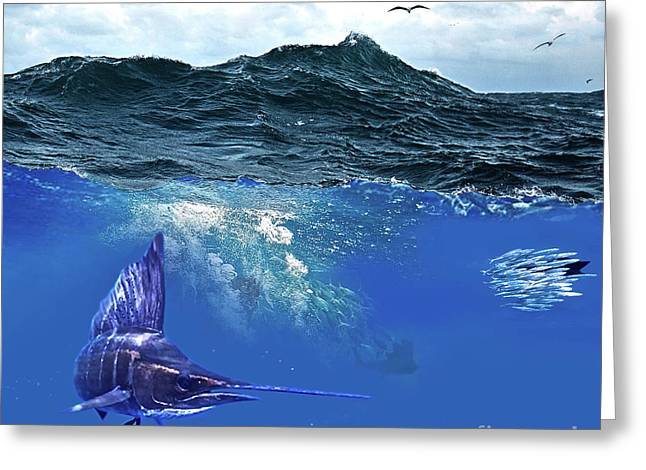 A Large Sailfish, Herding Schools Of Fish Greeting Card by Thomas Pollart