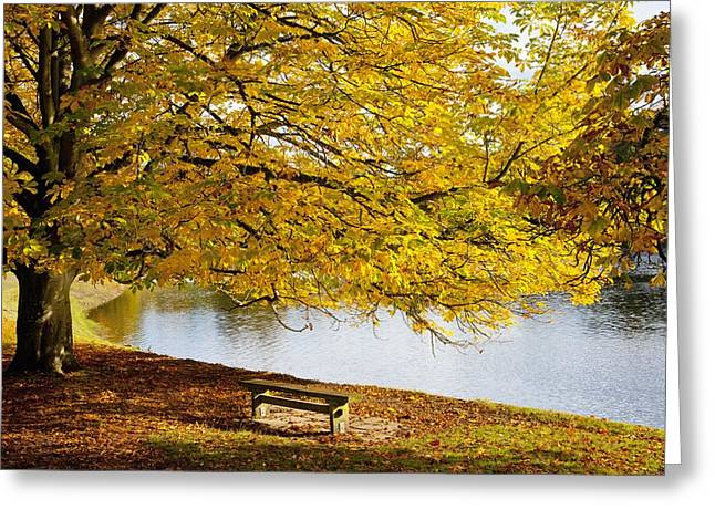 A Large Tree And Bench Along The Water Greeting Card