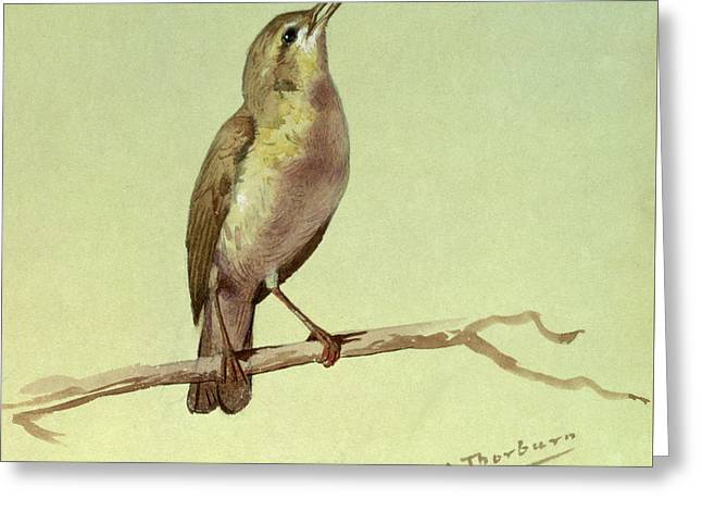 A Lark Greeting Card