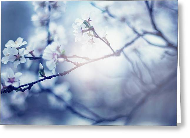 A Light Exists In Spring Greeting Card