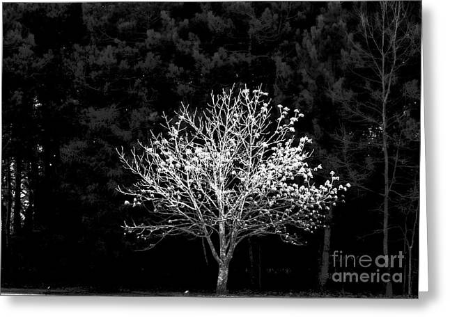 A Light In The Forest Greeting Card