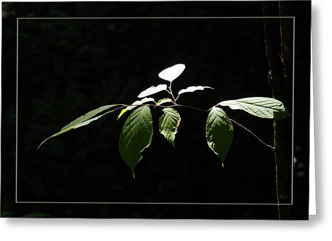A Light In The Forest Greeting Card by Robert Clayton