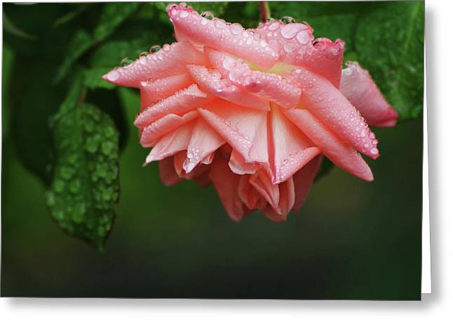 A Light Rain Greeting Card by Terrie Taylor