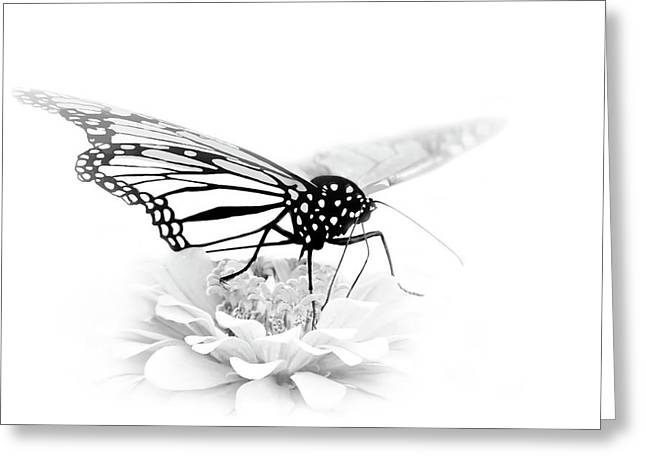 A Light Touch - Butterfly Greeting Card by Nikolyn McDonald
