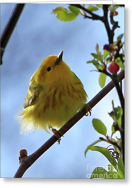 A Liitle Yellow Puff Ball Greeting Card by Marle Nopardi