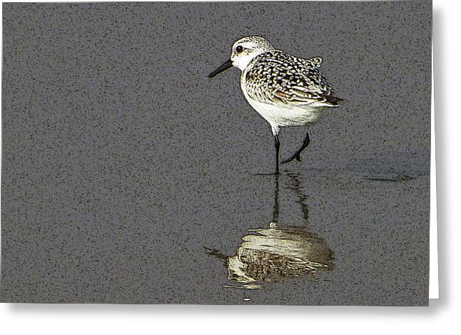 A Little Bird On A Beach Greeting Card