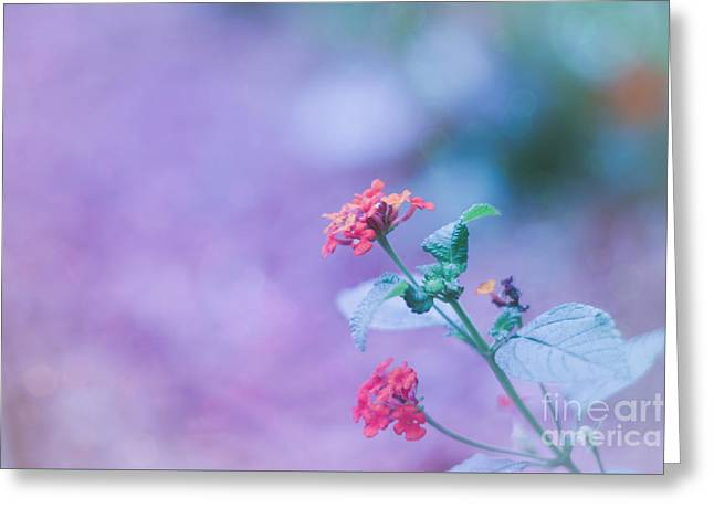 A Little Softness, A Little Color - Macro Flowers Greeting Card