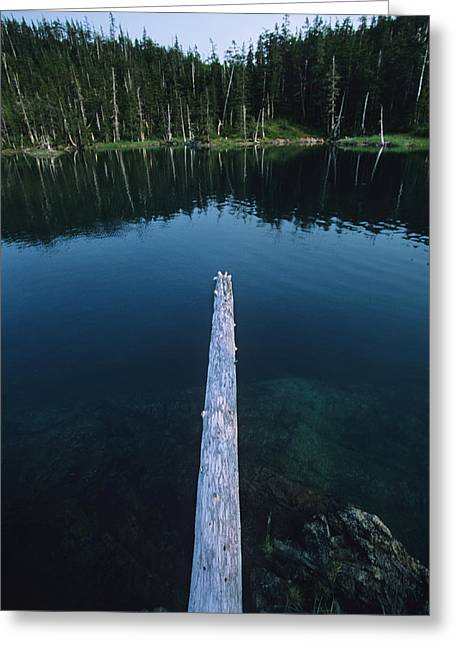 A Log Juts Out Over A Lake Greeting Card by Bill Hatcher