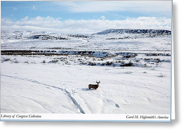 Greeting Card featuring the photograph A Lone Buck Deer In Carbon County, Wyoming by Carol M Highsmith