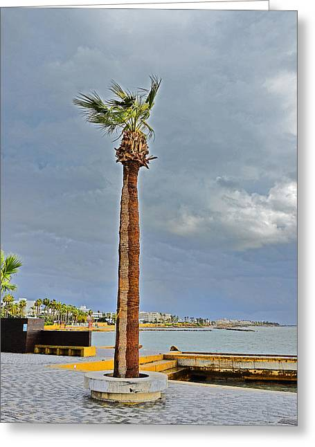 A Lone Palm Tree. Island Of Love. Greeting Card by Andy Za