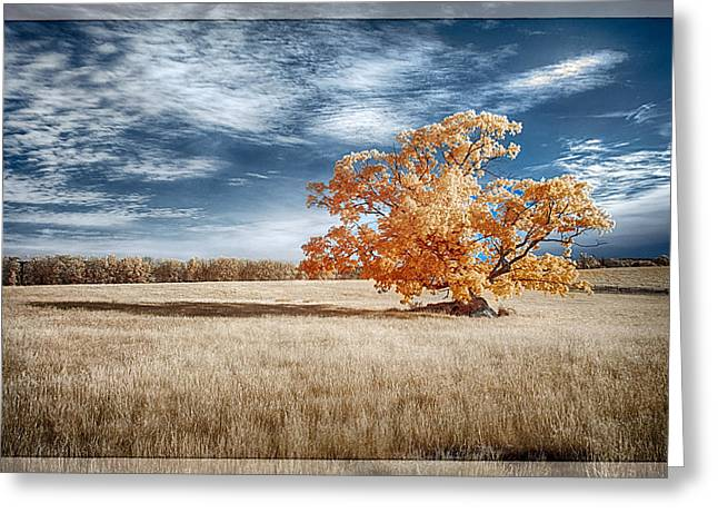 A Lone Tree Greeting Card