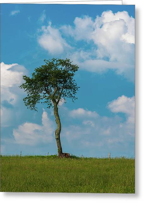 Greeting Card featuring the photograph A Lonely Tree On A Hill by Guy Whiteley