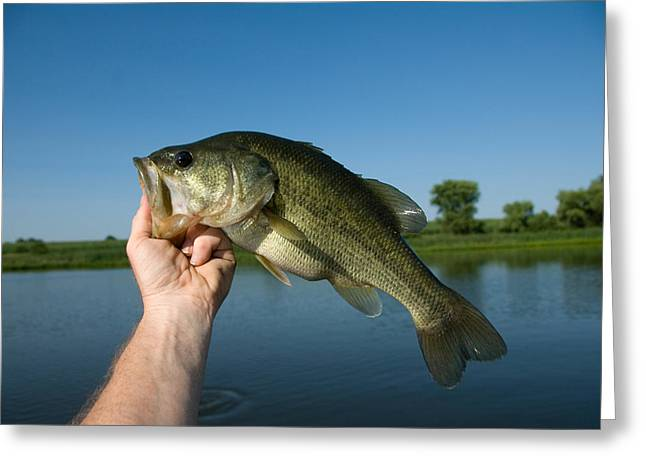 A Man Holds A Largemouth Bass Greeting Card by Joel Sartore