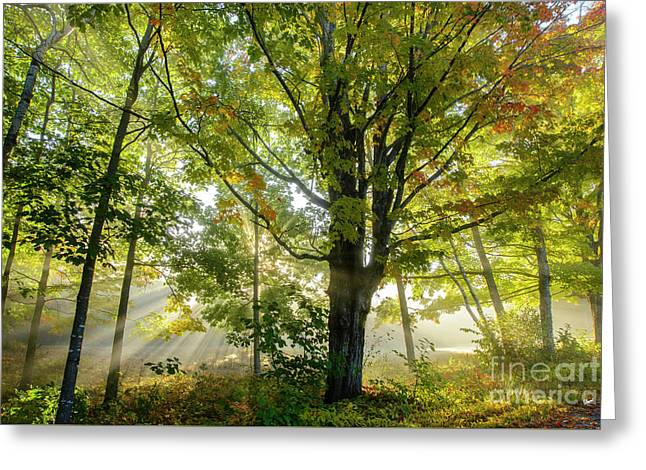 A Misty Fall Morning Greeting Card