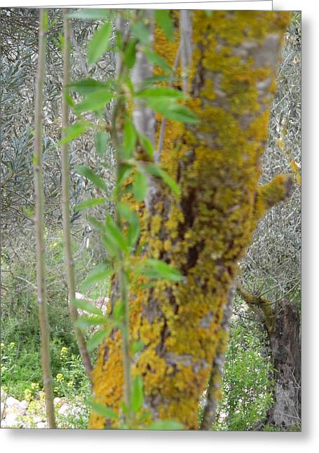 A Mossy Tree Trunk Greeting Card by Esther Newman-Cohen