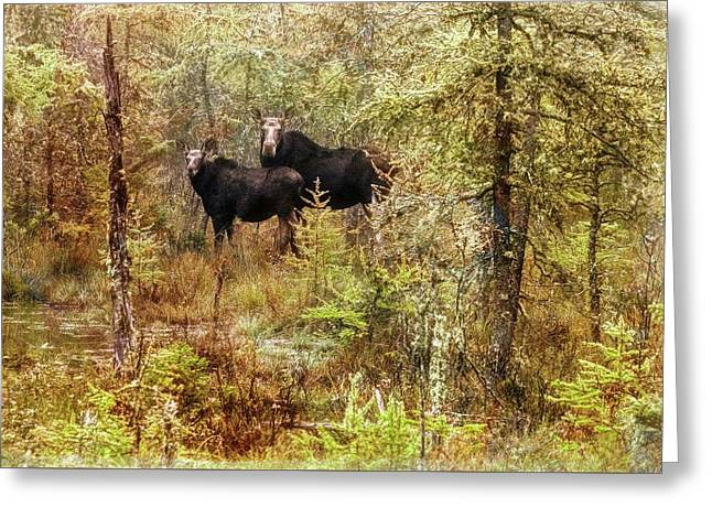 A Mother And Calf Moose. Greeting Card