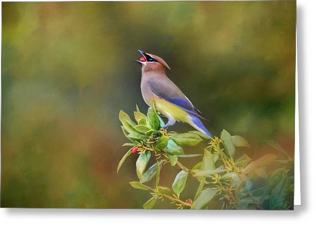 A Mouth Full Of Berry Bird Art Greeting Card