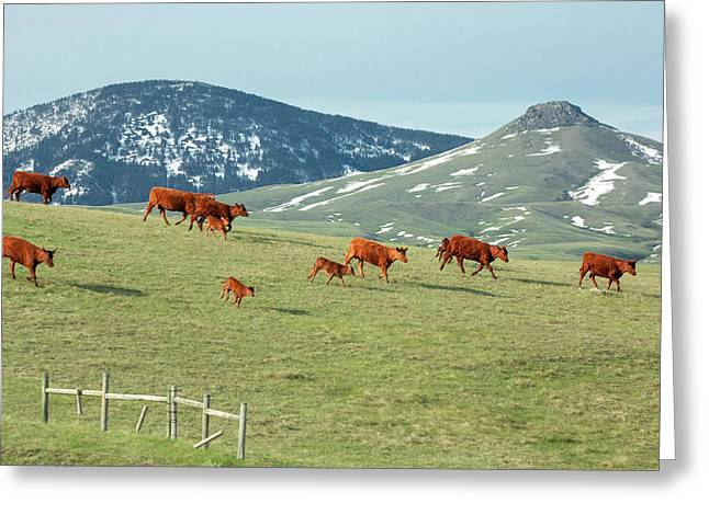 A Moving Herd Greeting Card by Todd Klassy