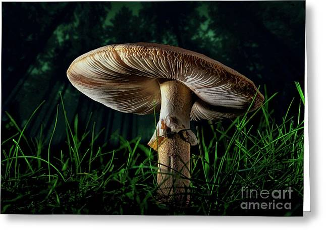 A Mushroom In The Woods Greeting Card