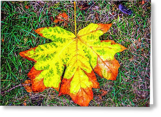 A New Leaf Greeting Card by Jon Burch Photography