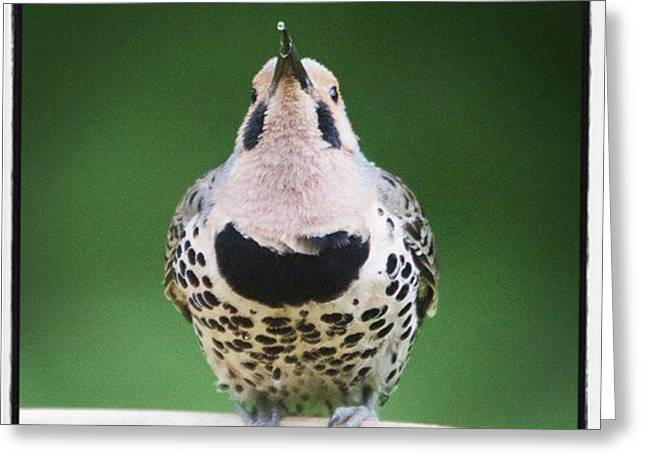 A Northern Flicker Blowing Bubbles At Greeting Card