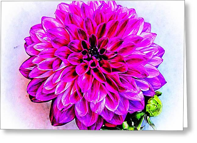 A Painted Dahlia Greeting Card by Clare Bevan