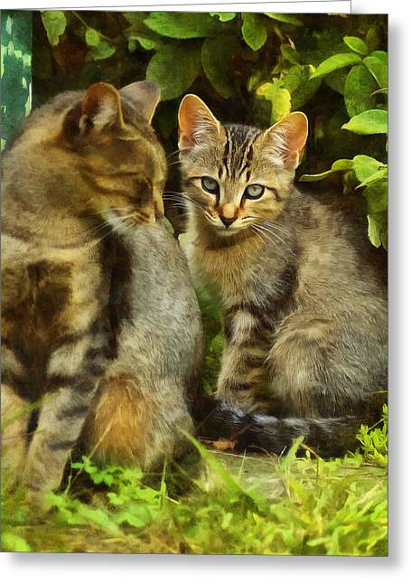 A Pair Of Feral Cats Greeting Card