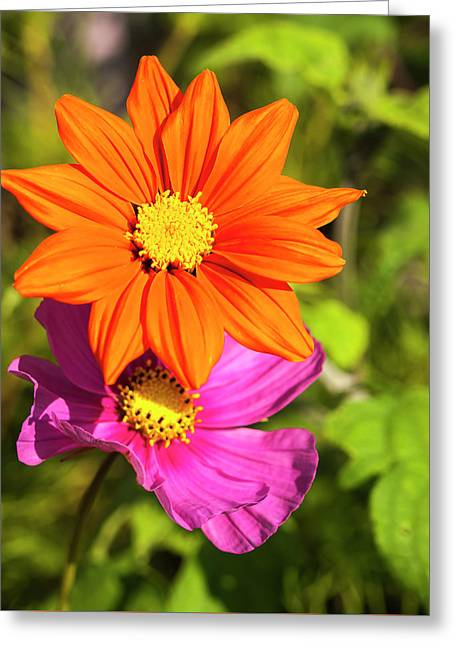 A Pair Of Flowers 2017 Greeting Card