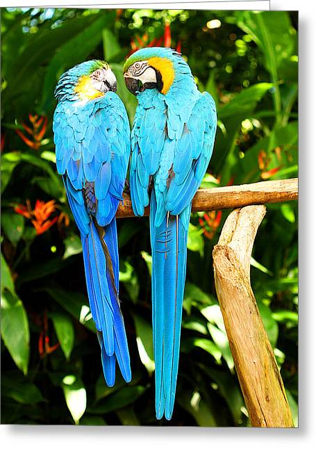 A Pair Of Parrots Greeting Card by Marilyn Hunt