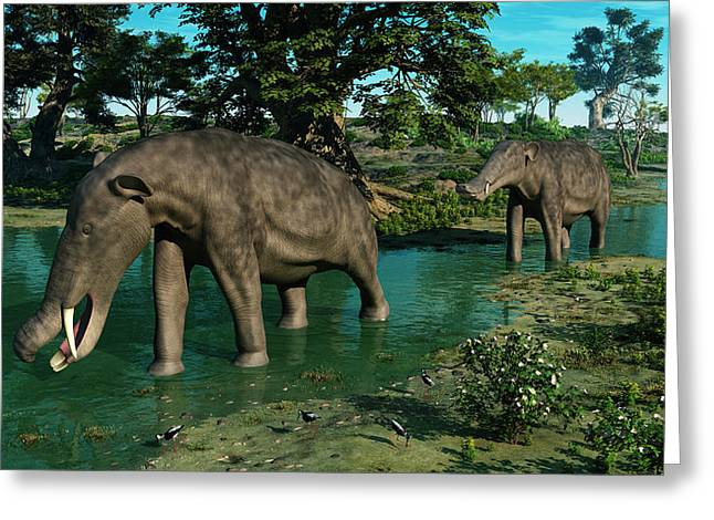 Miocene Greeting Cards - A Pair Of Platybelodon Grazing Greeting Card by Walter Myers